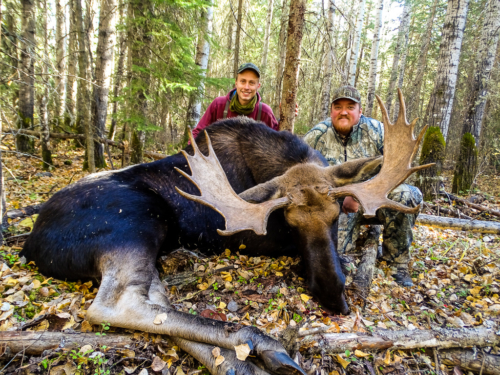 Alberta moose hunting in Canada