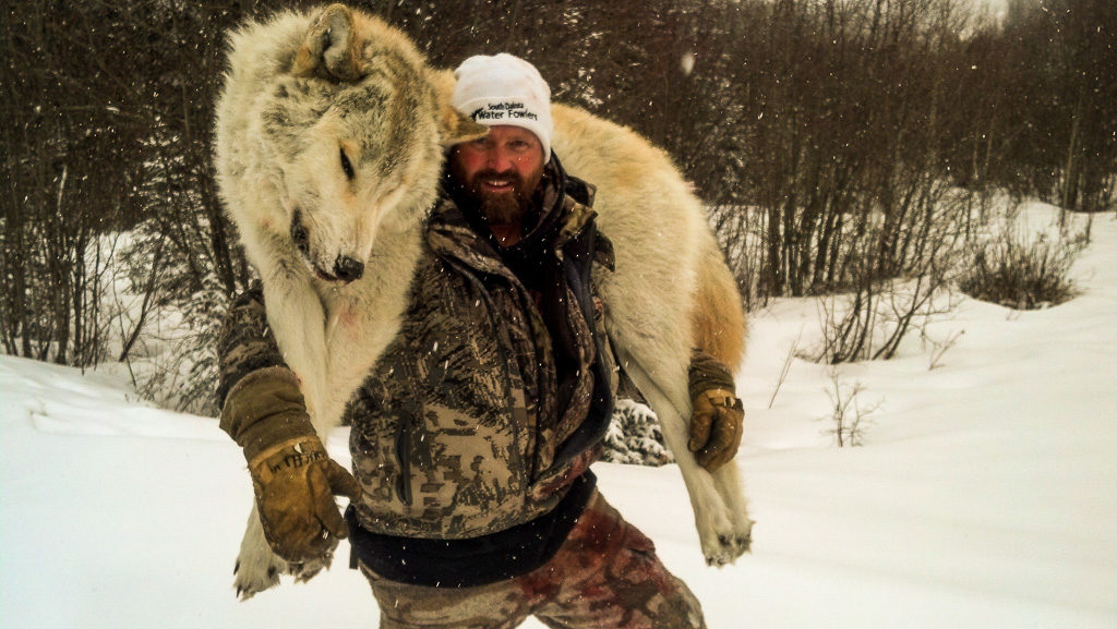 Adventures while wolf hunting in Alberta, Canada