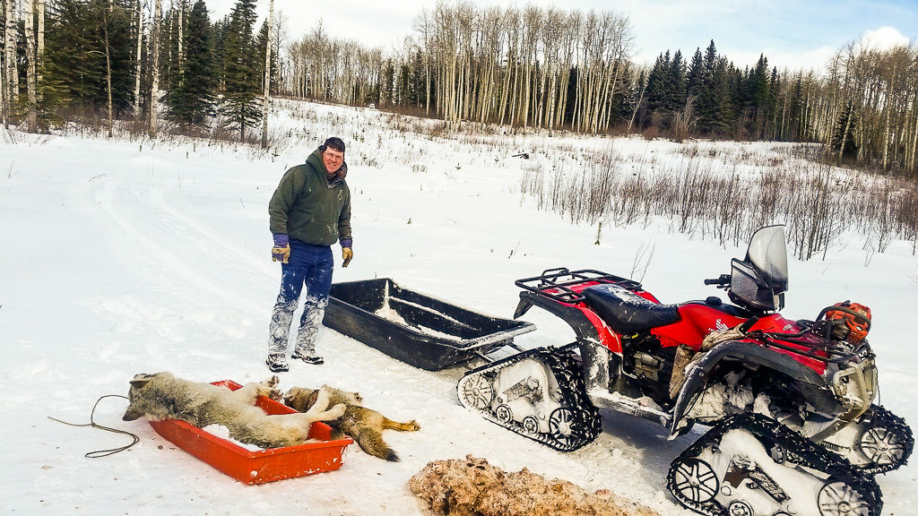 Treaded quad (ATV) used by Alpine Outfitters for hunting wolves in Alberta, Canada