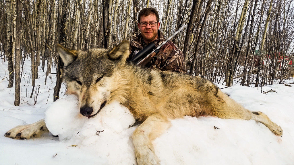 Adventures wolf hunting in Alberta, Canada with Alpine Outfitters